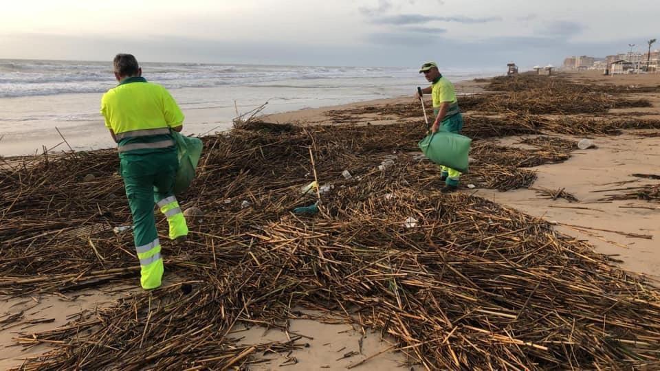 Guardamar retira entre casi 1.000 toneladas de cañas y plásticos arrastrados por el río 6