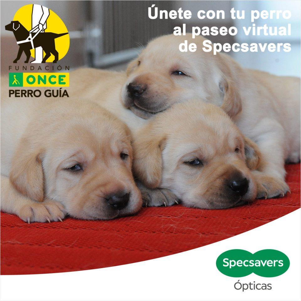 Paseos virtuales en la Vega Baja con el fin de recaudar fondos para los perros guía 6