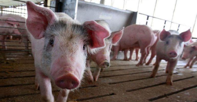 Los internautas, en contra de la utilización de animales en fiestas populares 6