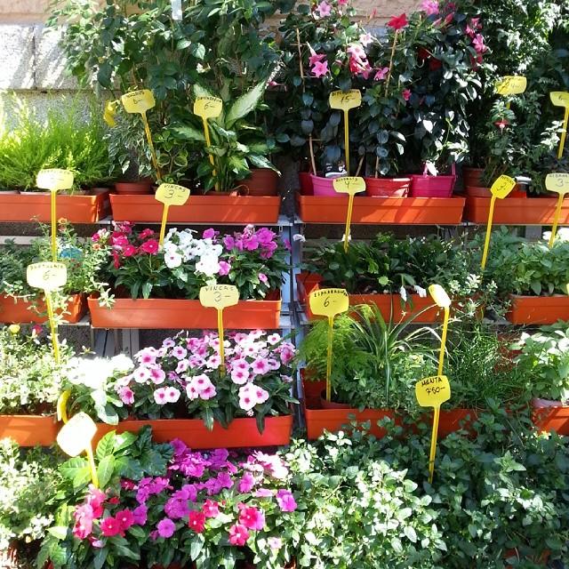 El sector de la flor pierde todas sus ventas y producción durante la crisis 6