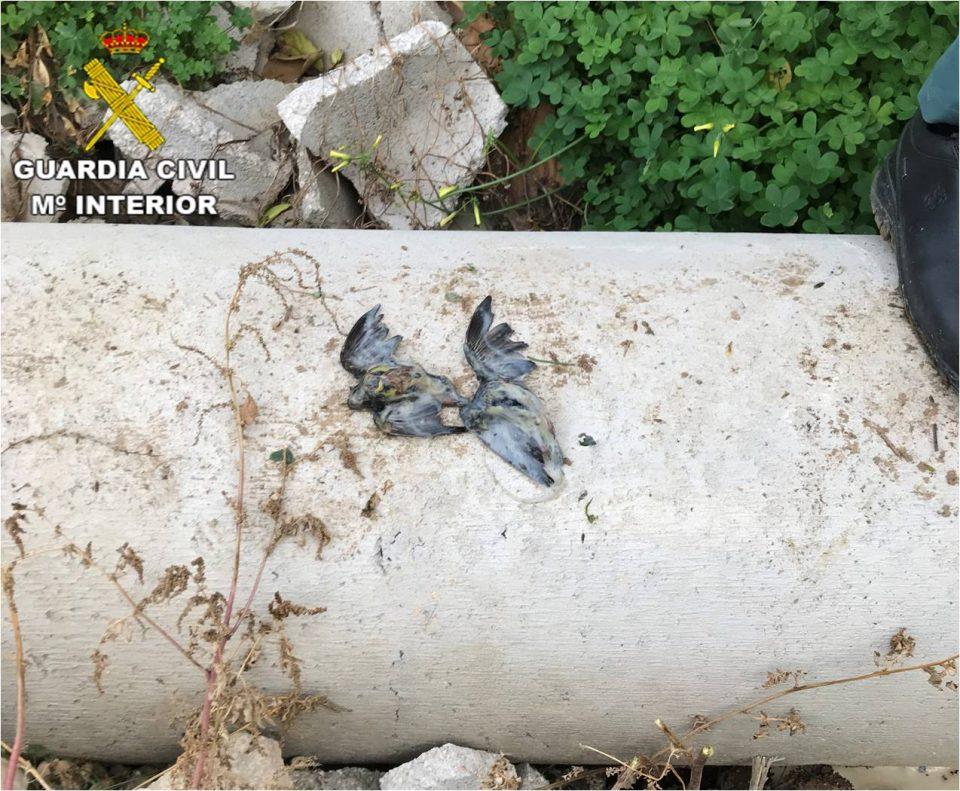 Investigan en Orihuela un vertido tóxico en un canal de riego 6