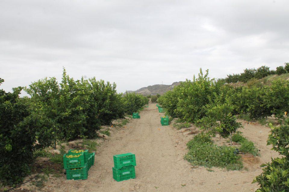 Agricultura y Economía coordinan bolsas de empleo para solucionar la falta de temporeros 6