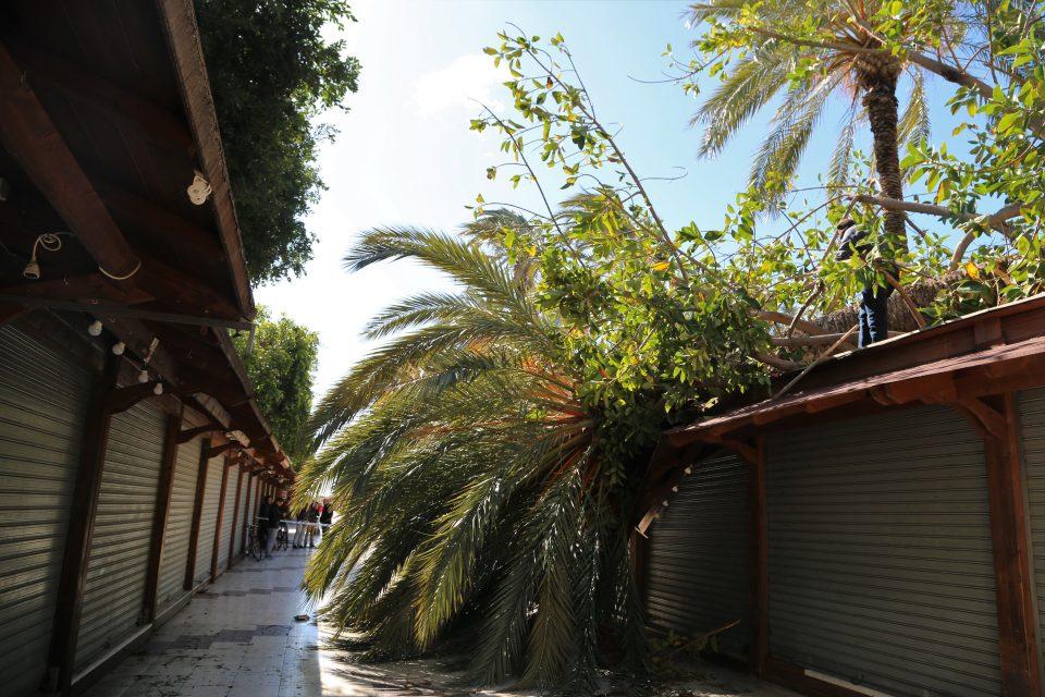 Proyecto Mastral: marzo fue un mes algo seco y normal en temperaturas 6