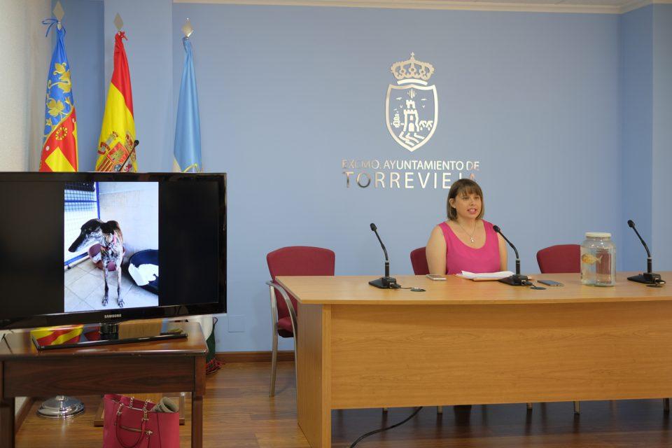 El albergue municipal de Torrevieja busca adoptantes 6