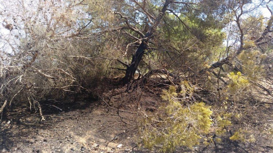 Un incendio calcina 300 m2 de pinar en la entrada de Torrevieja 6