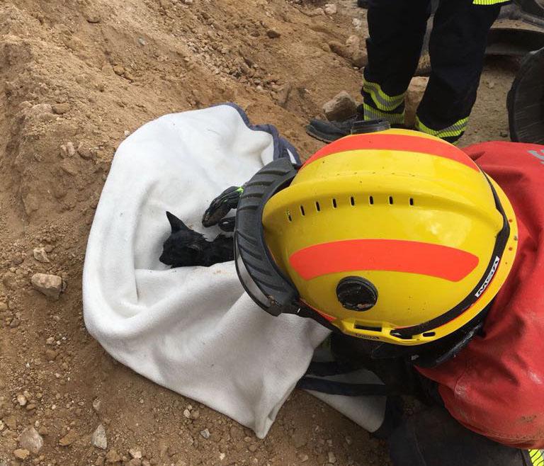 Un gato atrapado bajo tierra en Guardamar moviliza a bomberos y cuerpos de seguridad 6