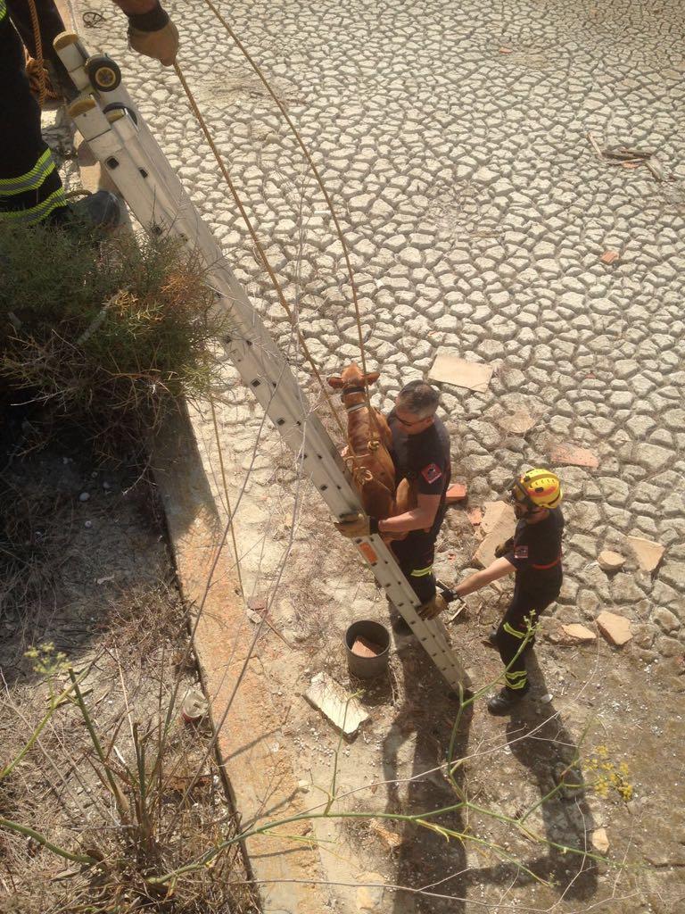 Los Bomberos rescatan a un podenco en Benijófar 6
