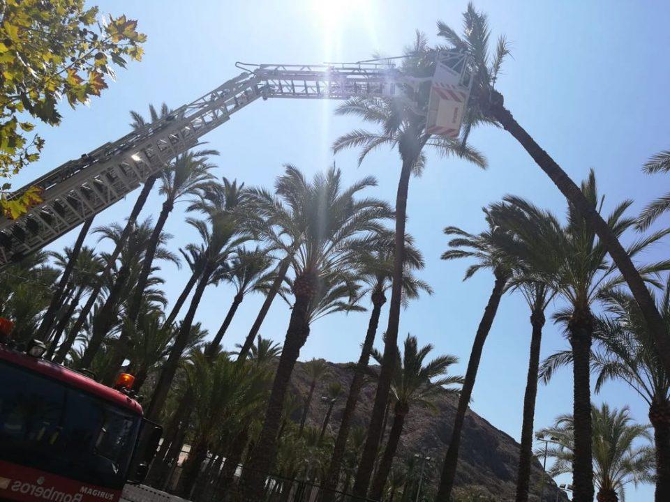 Los bomberos evitan la caída de una palmera en Orihuela 6