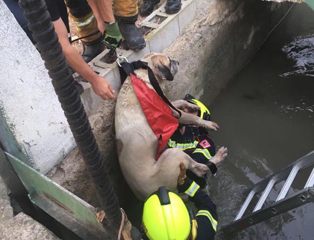 Los bomberos rescatan a un perro atrapado en una acequia de El Arenal 6