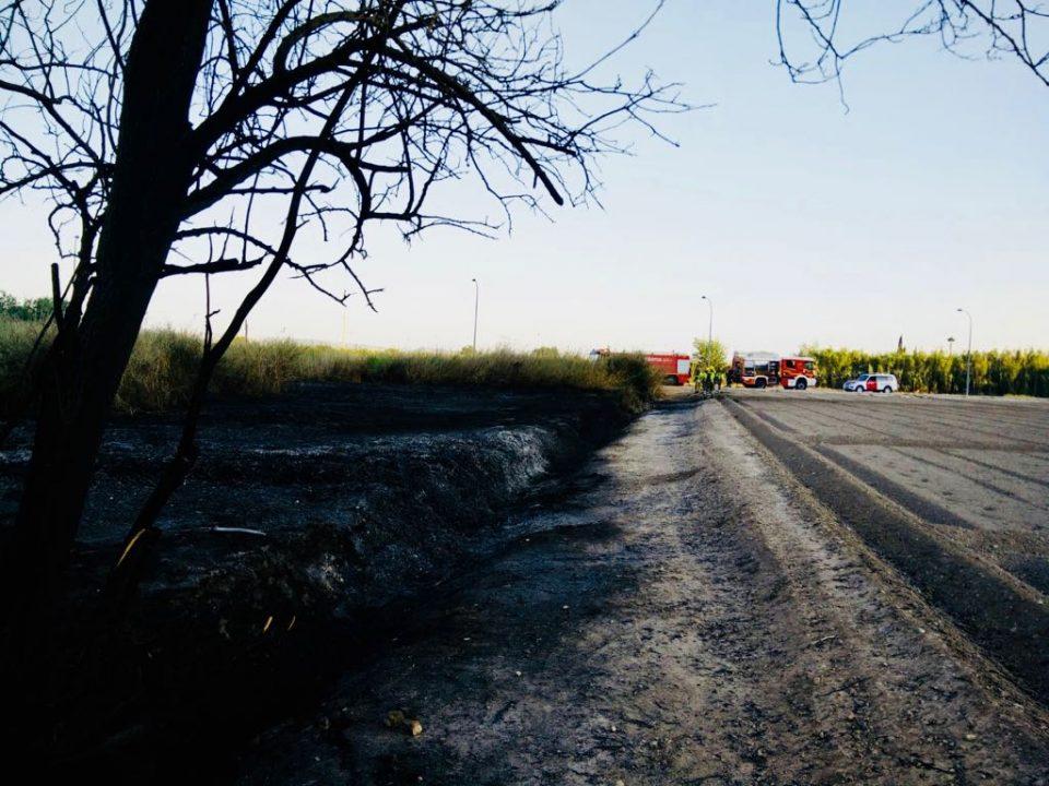 Las llamas calcinan 5.000 metros cuadrados en Callosa de Segura 6