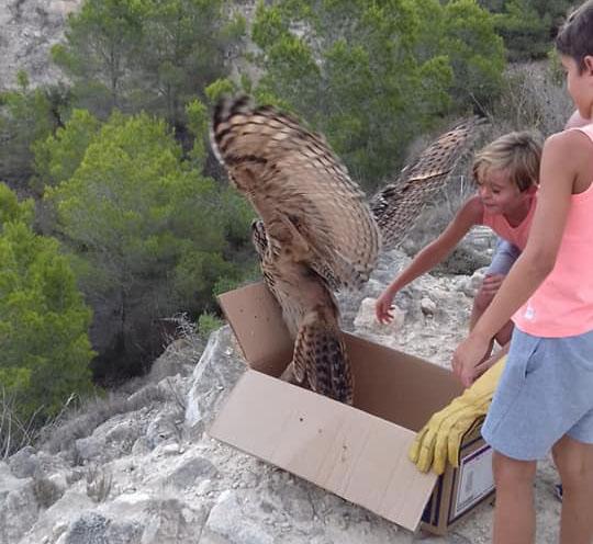 Rescatan a un búho real tras caer en una balsa en Benejúzar 6
