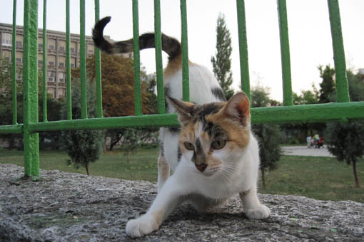 """Los voluntarios de """"Colonias felinas"""" en Campoamor reciben amenazas 6"""