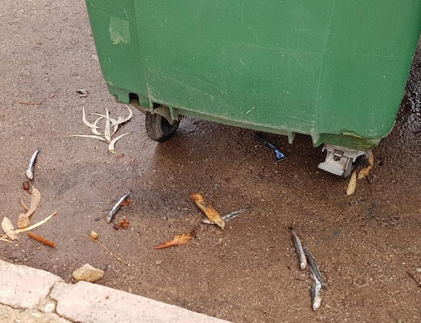 Sanidad investiga el posible envenenamiento de gatos en Orihuela Costa 6