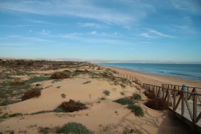 Conselleria decide regenerar las dunas de Guardamar del Segura 6