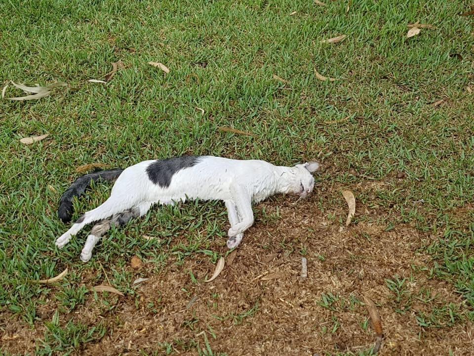 Varios gatos aparecen envenenados en Orihuela Costa 6