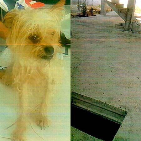 Rescatan a una perrita que estaba atrapada en Almoradí 6