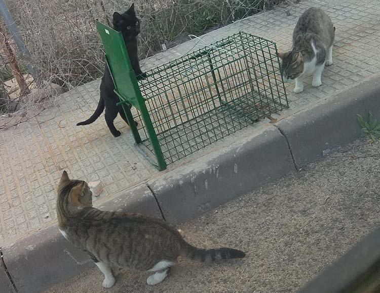 Torrevieja inicia otra campaña de castración de gatos 6