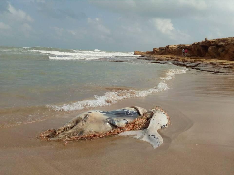 Hallan el cadáver de un delfín en Torrevieja 6