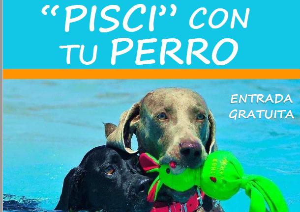 Torrevieja abre la piscina exterior municipal a los perros 6