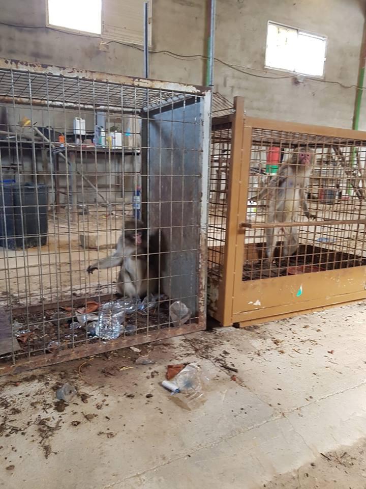 Denuncian el lamentable estado de cinco macacos en Guardamar del Segura 6
