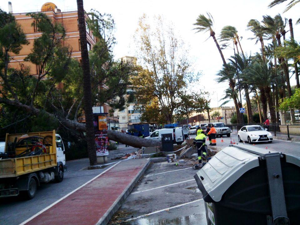 Orihuela sufre las consecuencias tras las fuertes rachas de viento de esta madrugada 6