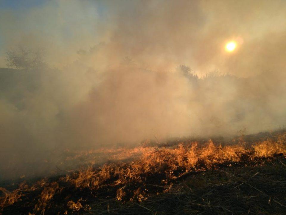 Un incendio calcina 7.000 m2 de cañar entre La Campaneta y Molins 6