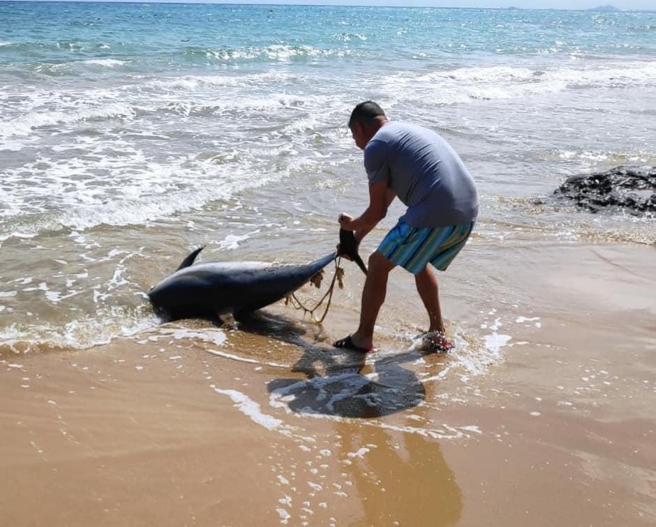 Aparece un delfín muerto en una playa de Torrevieja 6