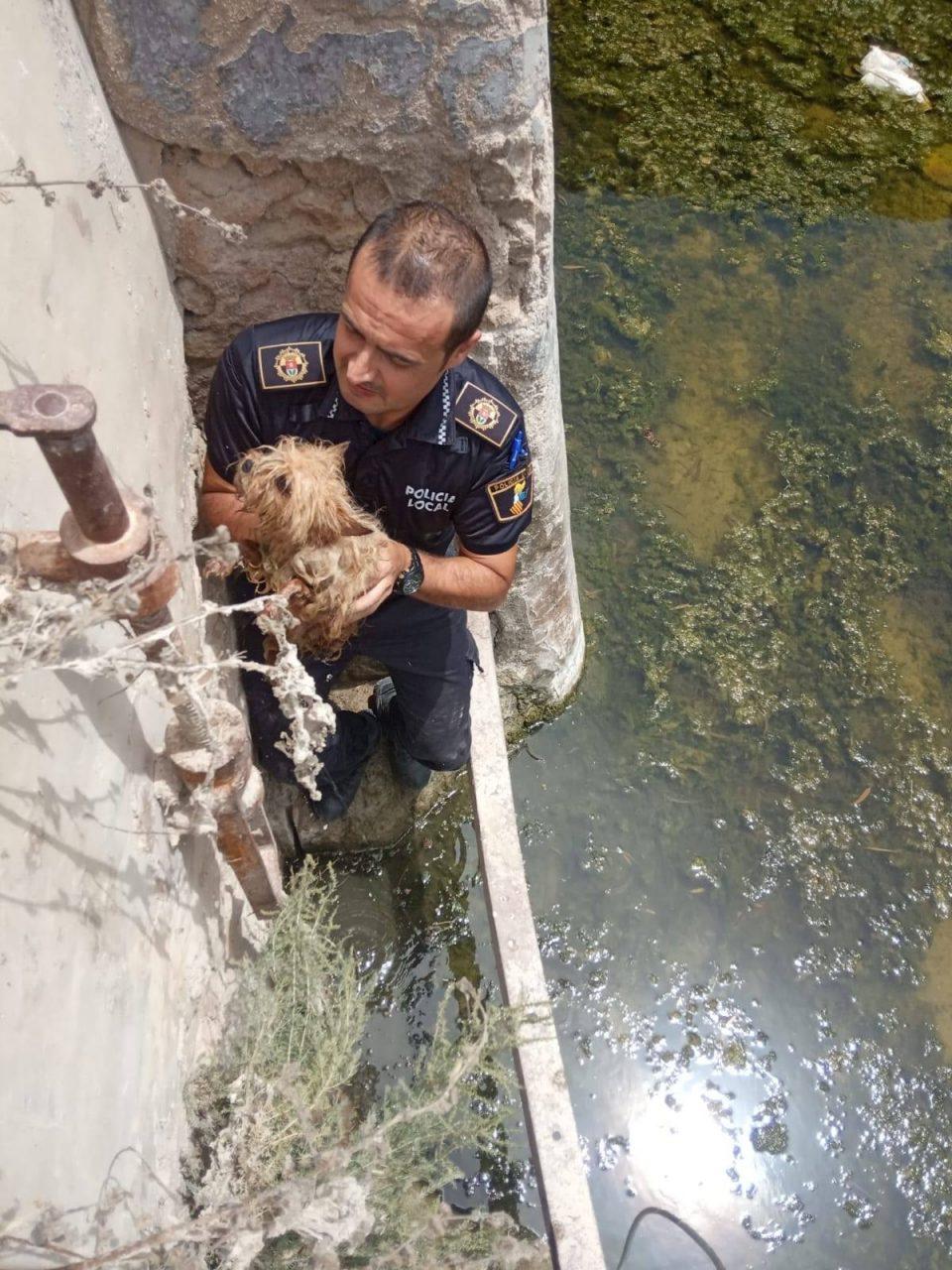 La Policía Local rescata a dos perros en San Fulgencio 6
