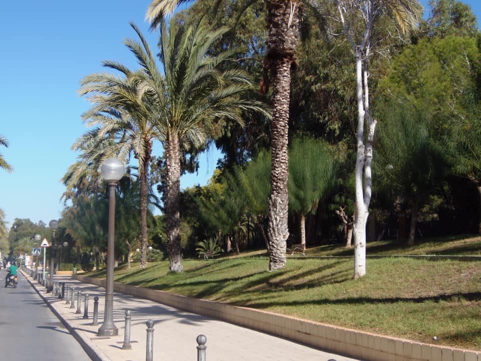 Abierto el procedimiento de licitación de la Avenida los Pinos de Guardamar 6