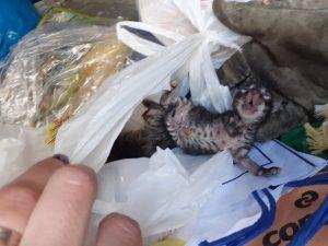 Unos vecinos de Benejúzar encuentran gatos recién nacidos en un contenedor 7