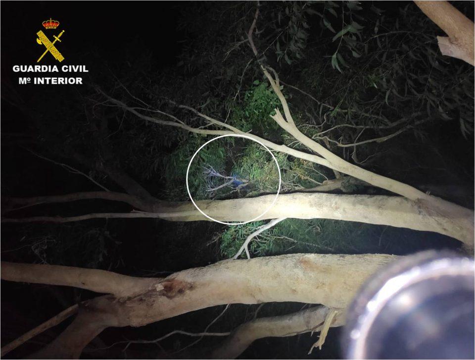 Un hombre se sube a un árbol para evitar ser detenido en Guardamar del Segura 6