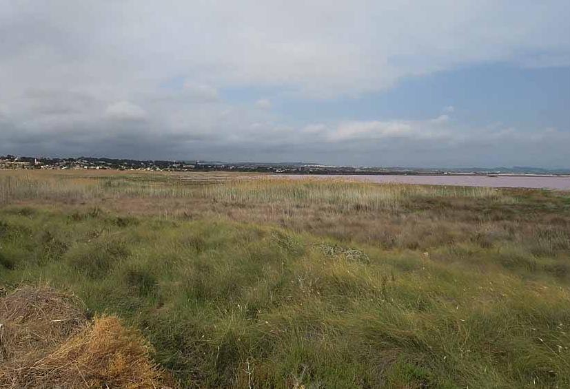 Los ecologistas se oponen al permiso de cazar durante el Estado de Alarma 6