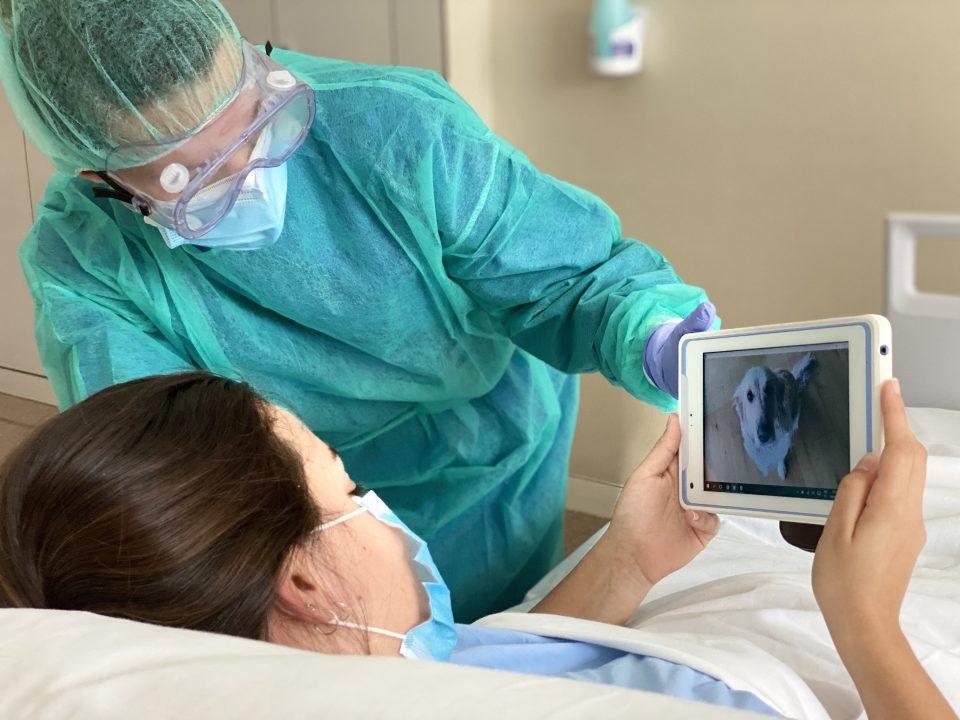 El Hospital de Torrevieja facilita las visitas virtuales de mascotas a pacientes con COVID-19 6