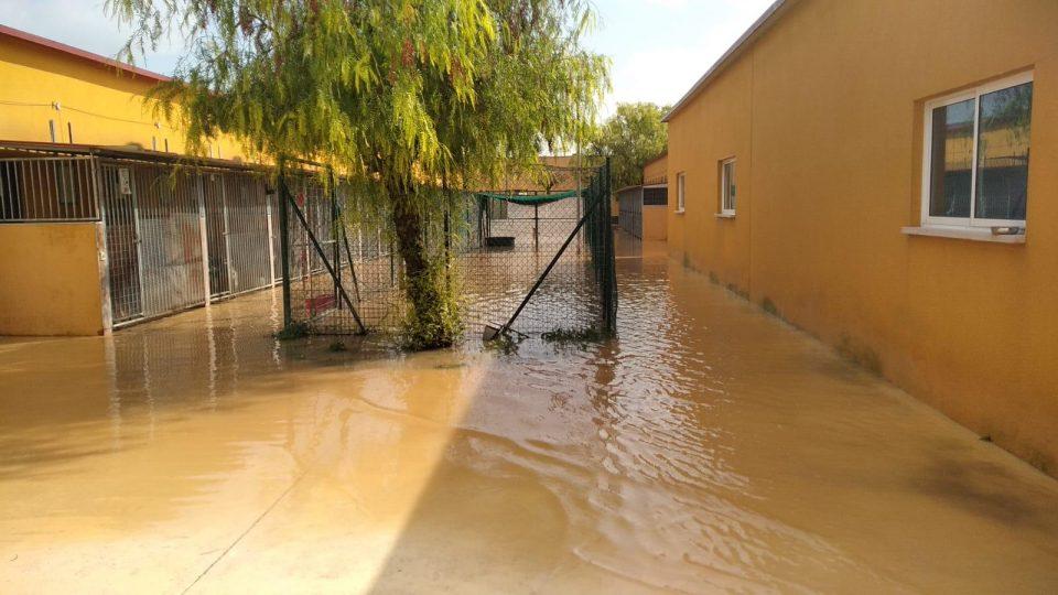 Ya se puede acceder al albergue de Asoka Orihuela 6