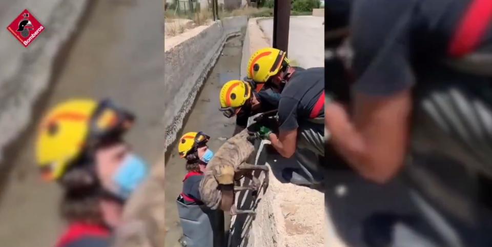 Rescatan a un perro atrapado en una acequia en Orihuela 6