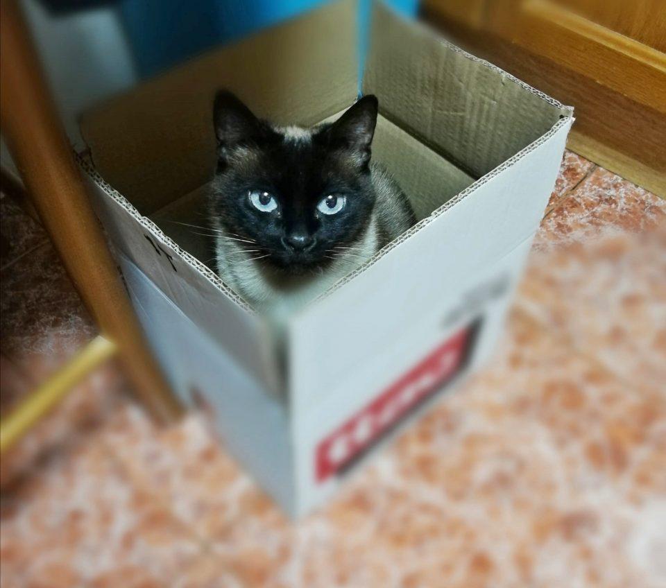 Consejos para que nuestras mascotas sobrelleven el confinamiento 6