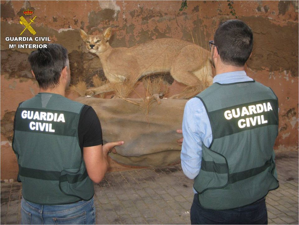 La Guardia Civil interviene en Torrevieja varias piezas de especies protegidas 6