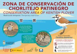 Torrevieja refuerza las medidas para salvaguardar la nidificación del chorlitejo patinegro 8