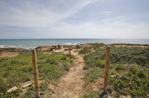 Delimitan los recorridos peatonales en Cabo Cervera para proteger la vegetación y flora 9