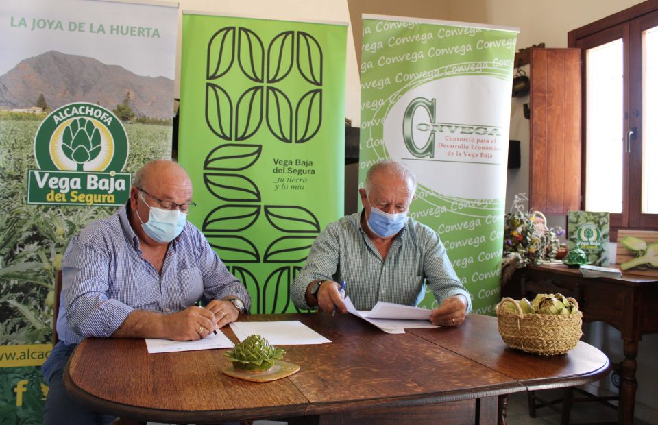 """La Asociación de la Alcachofa formaliza su adhesión a la Marca Territorio """"Vega Baja del Segura"""" 6"""