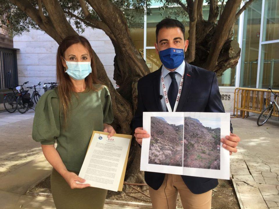 El PP denunciará al Botànic en Europa si no actúa frente al Cáctus de Arizona en la sierra de Orihuela 6