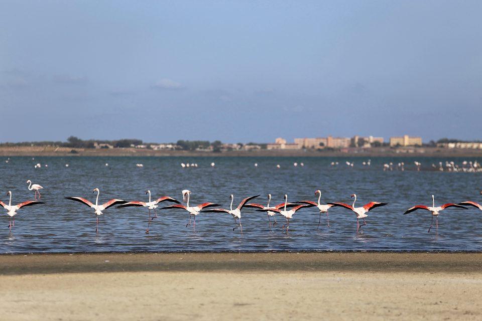 Regresan las rutas ecoturísticas nocturnas en el Parque Natural de las Lagunas de Torrevieja y La Mata 6