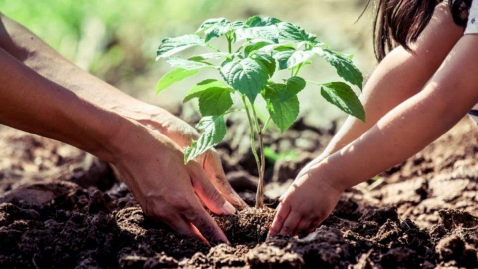 Sueña Torrevieja propone plantar un árbol por cada recién nacido empadronado en el municipio 6