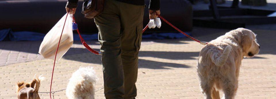 Rafal aprueba una ordenanza que regulariza la tenencia de animales 6