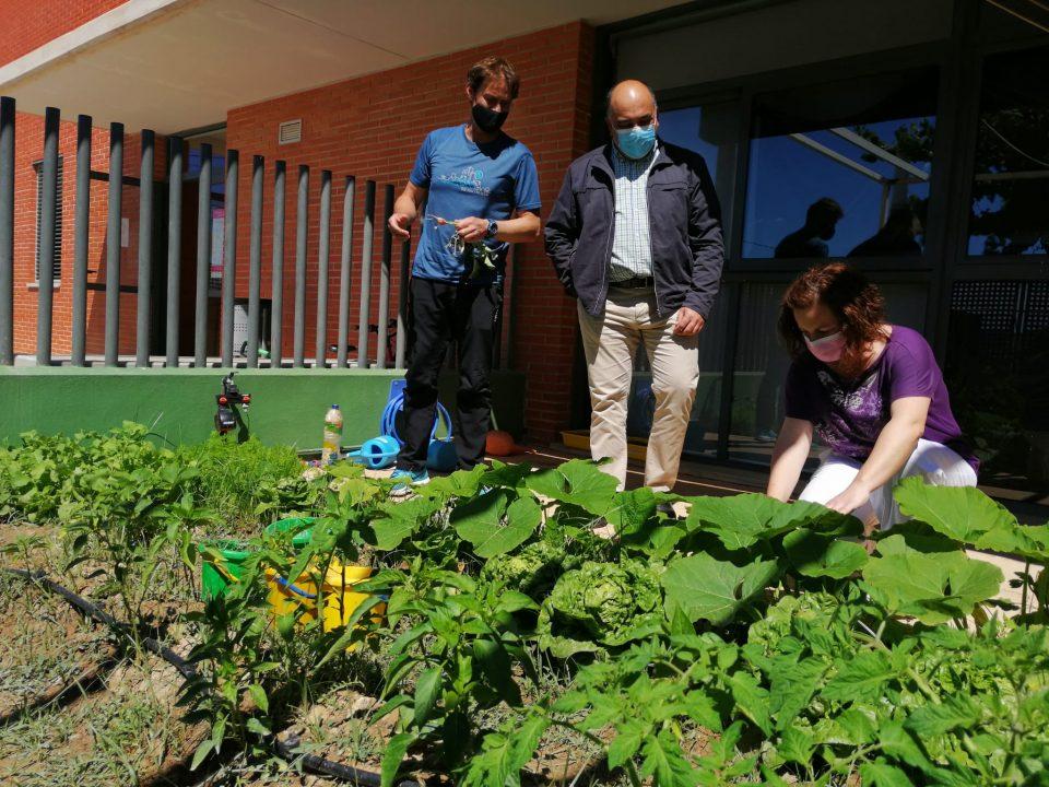 Fomento del consumo de hortalizas con el huerto escolar del CEIP Virgen del Monserrate de Torremendo 6