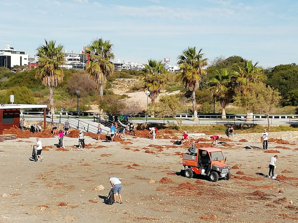 Más de medio centenar de voluntarios limpian las playas de Orihuela Costa 6
