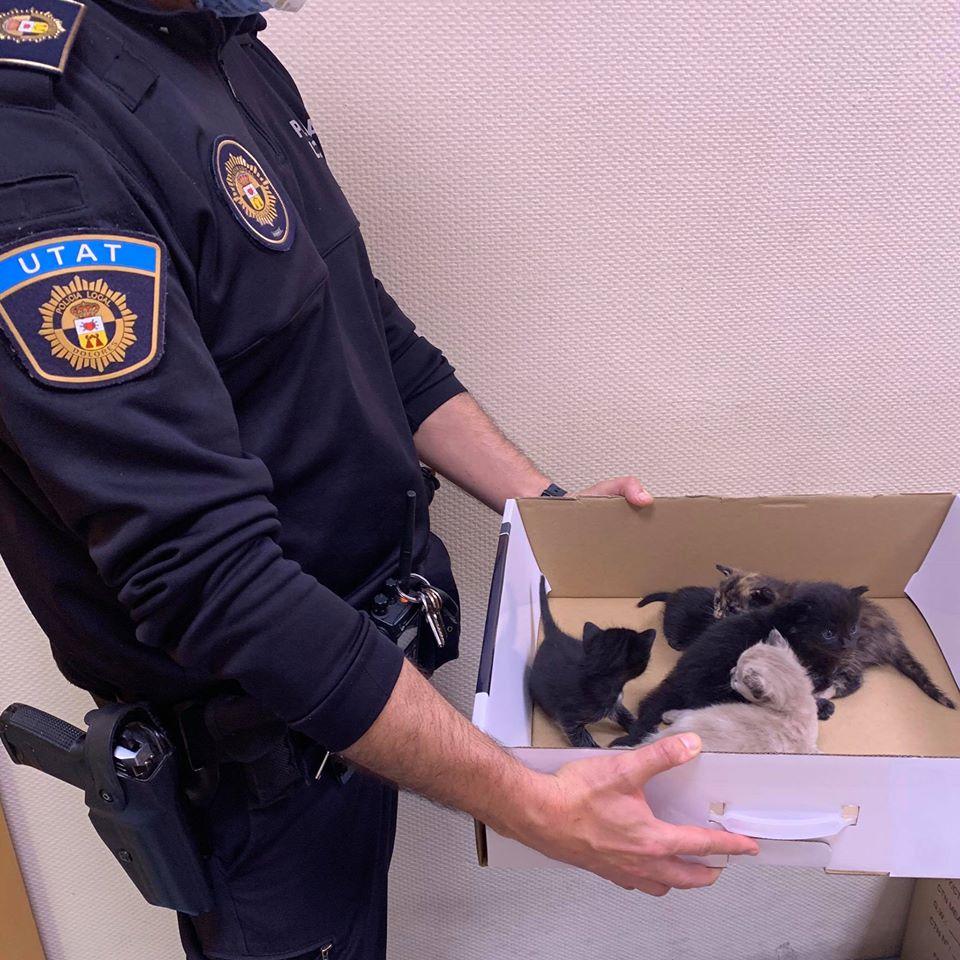 La Policía Local de Dolores rescata gatos recién nacidos abandonados en un contenedor 6