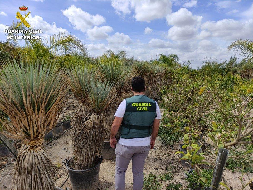 Detenido en Rafal el presunto autor del robo de 70 plantas de Yuca Rostrata 6