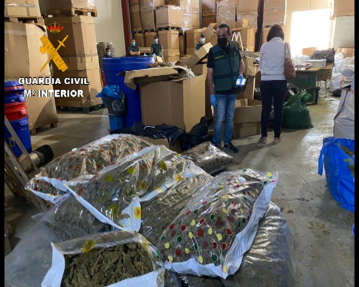 Desmantelada en Bigastro una de las primeras fábricas de hachís asentadas en España 6