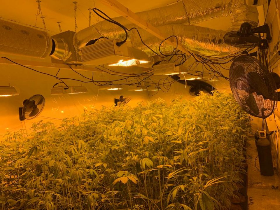 Desmantelan dos laboratorios de cultivo de marihuana en Catral 6